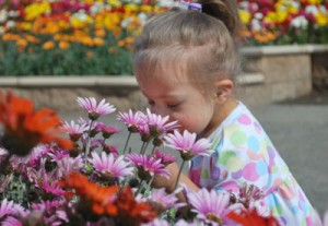This is a photo of a little girl smelling a flower.
