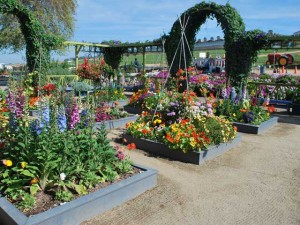 This is a photo of the artist's garden in The Flower Fields in Carlsbad, CA.