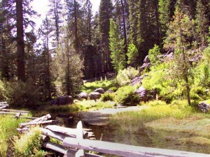 This is a photo of the springs just north of Chester in Plumas County, CA.